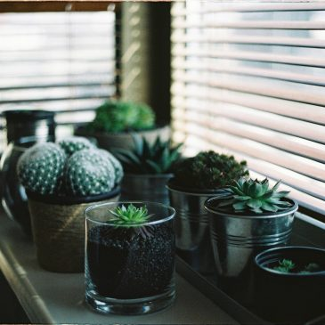 Guide to Choosing Blinds & Shades